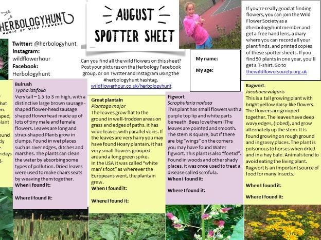 Wildflower ID Spotter sheet for August