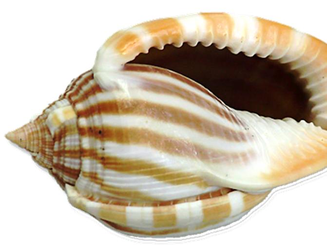 Measure the Shells Worksheet