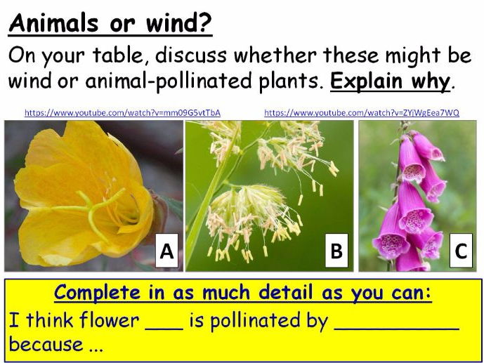 Pollination and Plant Reproductive Organs (Parts of Flowers) Year 8 Lesson PowerPoint (KS3 8Bc)
