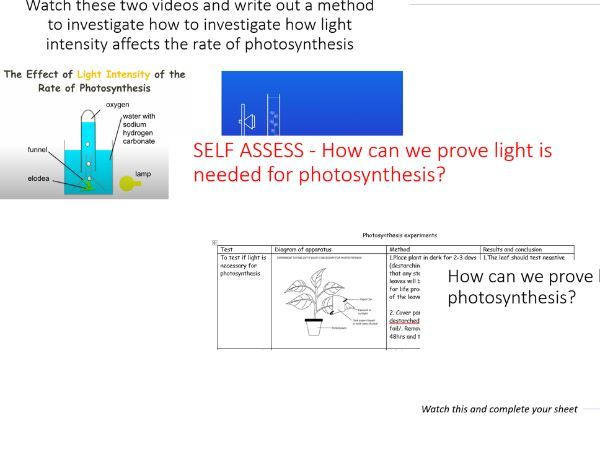 Photosynthesis Experiment Full Lesson