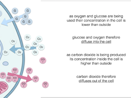 Explaining circulatory systems for A level biology (animated slides)