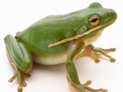 I Don't Want to be a Frog - sensory story