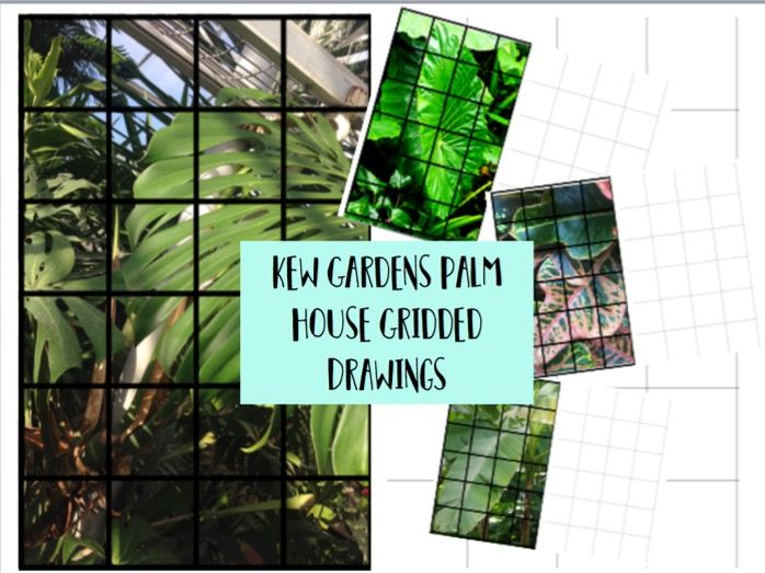Kew Gardens / Palm Leaf / Natural Forms  Gridded Drawing Homework / Cover Worksheets