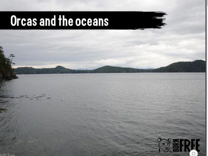 Orcas and the Oceans