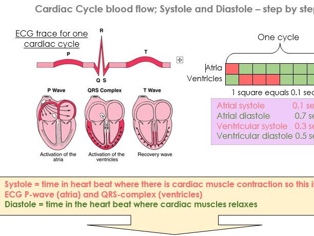 The Heart, vessels, blood pressure, cardiac cycle and understanding ECG's