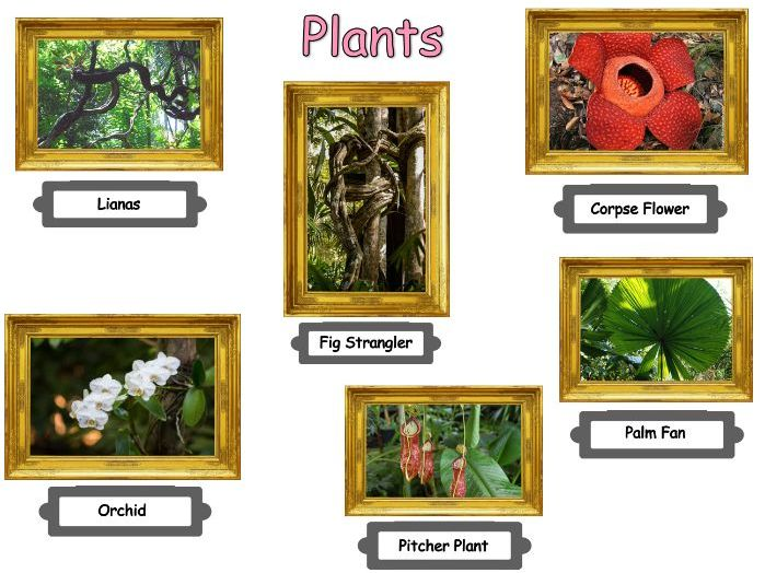 Tropical rainforest plant adaptations lesson and worksheets
