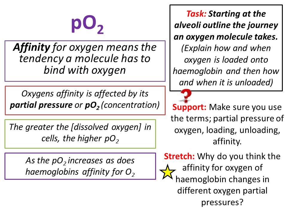 Haemoglobin - OCR AS/A Level Biology