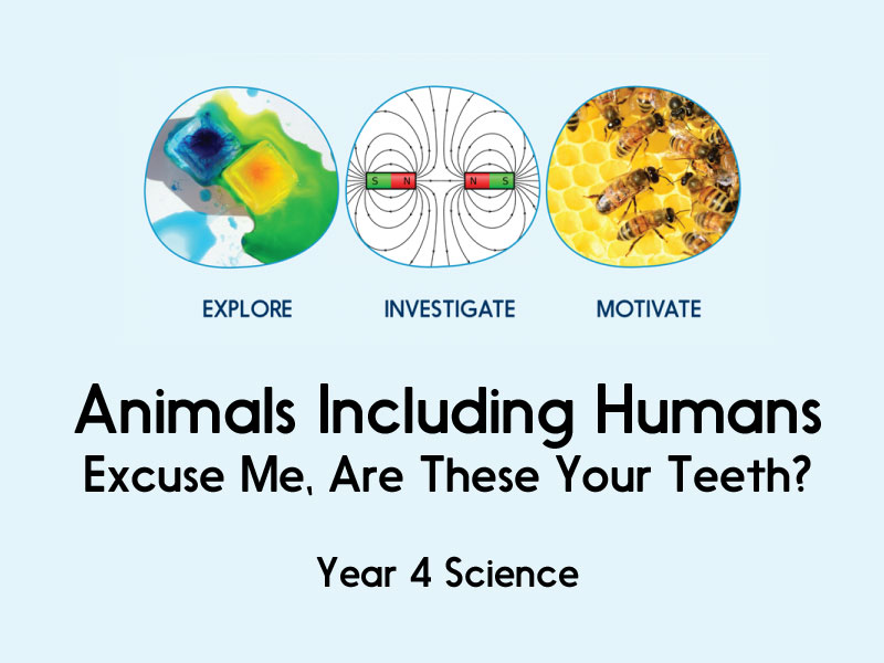 Animals, including humans - Excuse Me, Are These Your Teeth? - Year 4