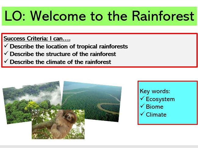 Rainforest SoW (KS3)