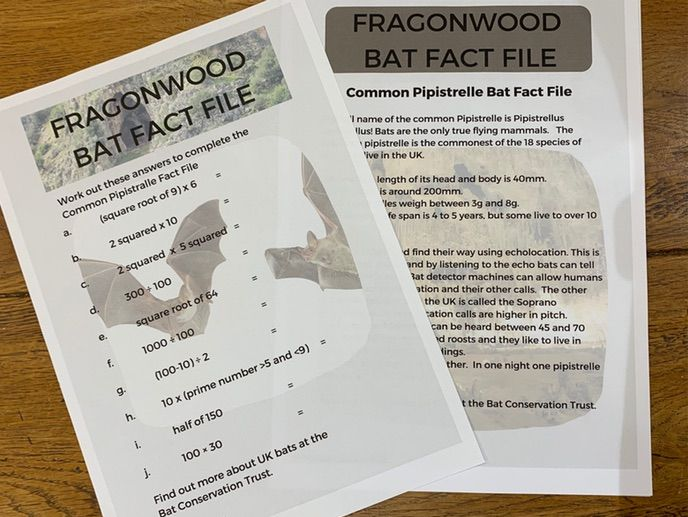 Fragonwood Pipistrelle Bat Fact File