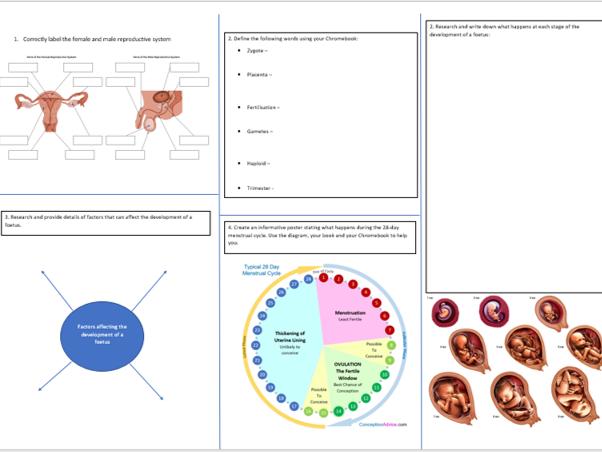 Year 7 Reproduction Revision Sheet