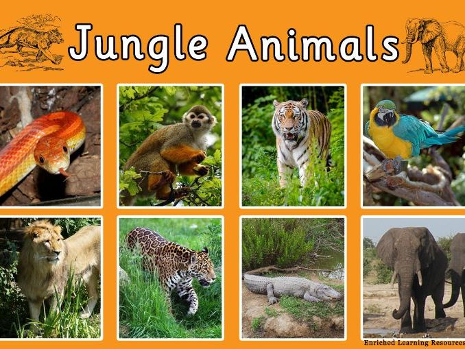 JUNGLE ANIMALS - A4 POSTER