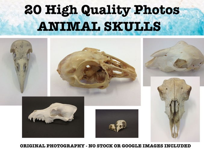 Animal Skulls -  Photo resource pack