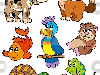 French - animals and pets - add me to your lessons to save time!