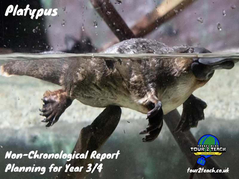 Platypus: Non-Chronological Report Planning for Year 3/4
