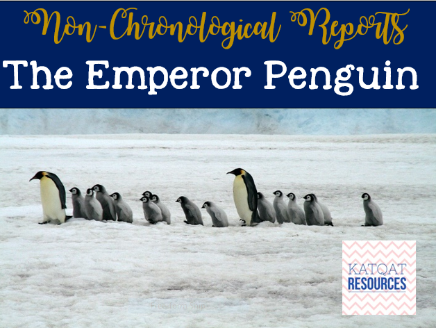 Non Chronological Reports - Penguins