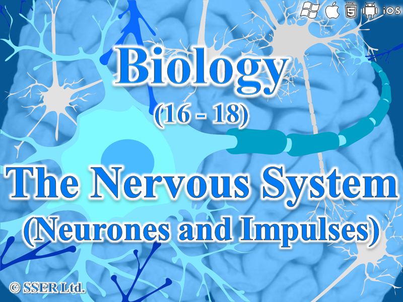 3.6.2.1 Neurones and Impulses