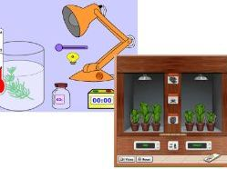 Factors that affect Rate of Photosynthesis