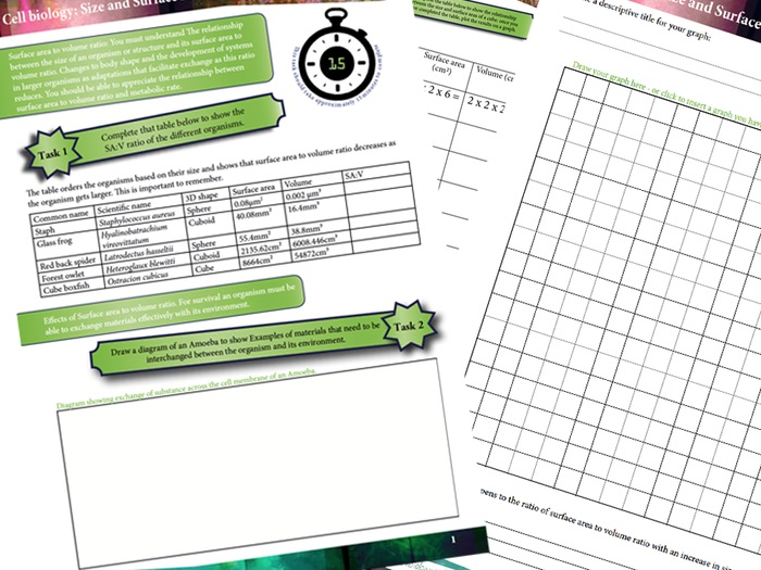 A Level Biology Size and Surface Area Interactive Worksheet