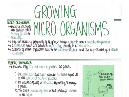 Growing Micro-Organisms (Cell Biology) Revision Poster [AQA GCSE Biology Triple 9-1]