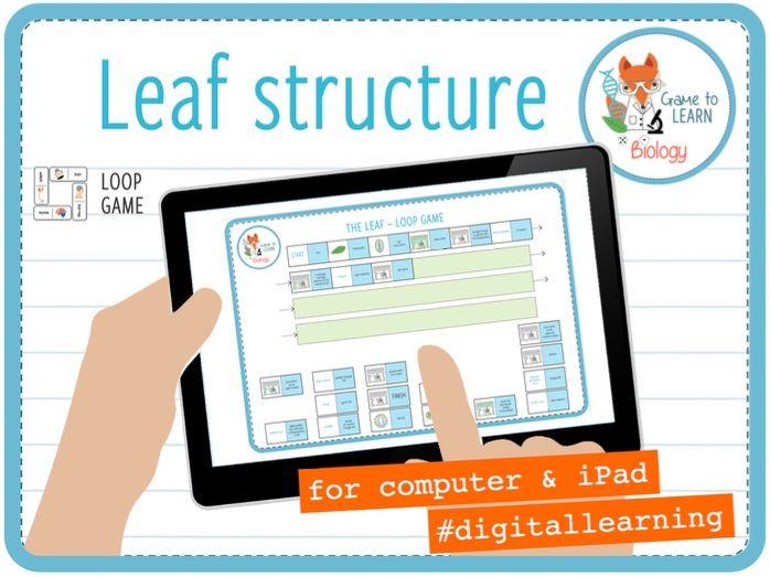 Leaf structure - Digital Loop Game for iPad (KS3/4)