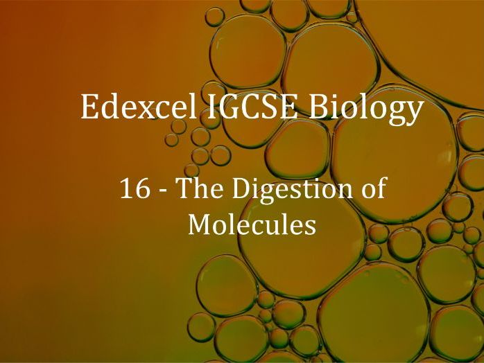 Edexcel IGCSE Biology Lecture 16 - The Digestion of Molecules