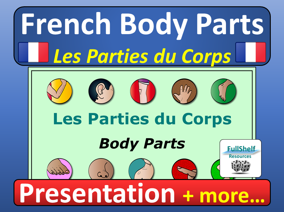 French Body Parts Les Parties du Corps