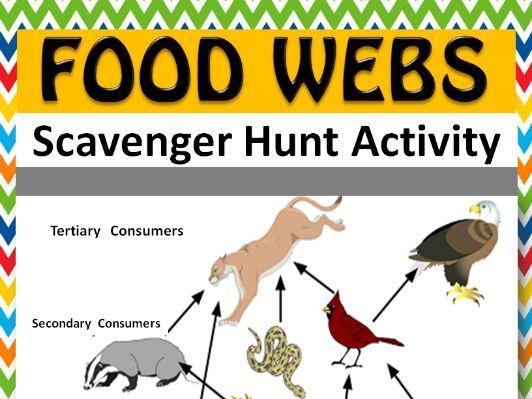 Foodwebs Scavenger Hunt Activity