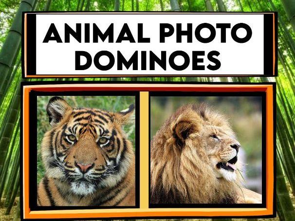 Animal Photo Dominoes