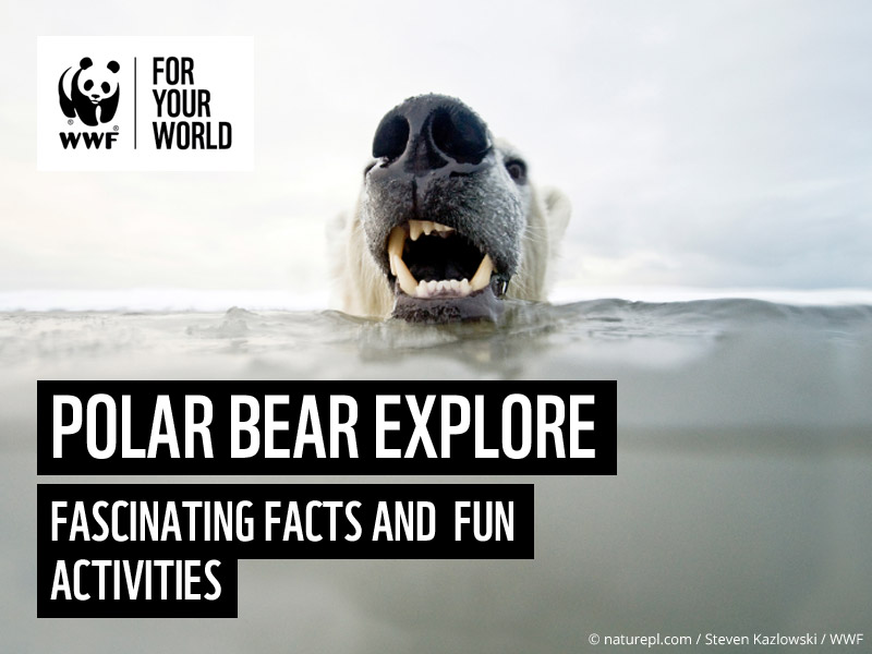 All about Polar Bears - WWF Explore Activity Poster