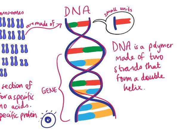 DNA & THE GENOME Revision Video GCSE 9-1 Bio & Combined Science - AQA