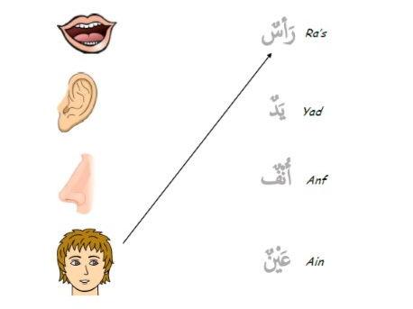 Arabic Worksheet on Body Parts