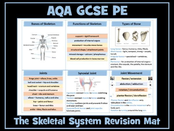 AQA GCSE PE - Skeletal System Revision Mat