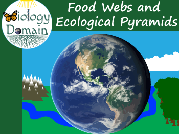 Food Webs and Ecological Pyramids Crossword and Word Search