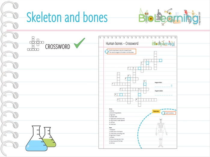 Skeleton and bones - Crossword (KS2/KS3)