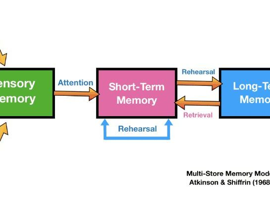 Encoding, Duration & Capacity and the Multi-Store Memory Model
