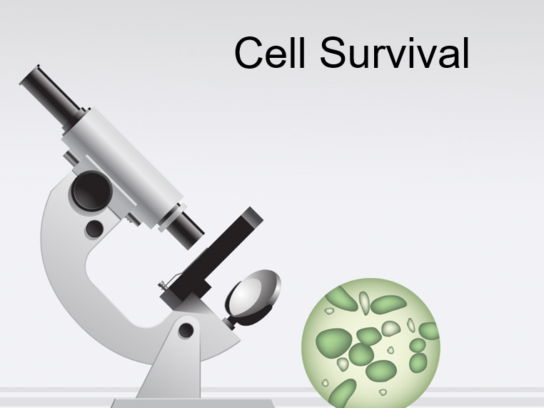 PowerPoint: Cell Survival