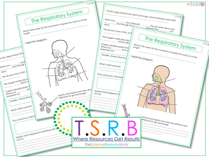 Joints and Movement by heidib82 Teaching Resources TES – Joints and Movement Worksheet