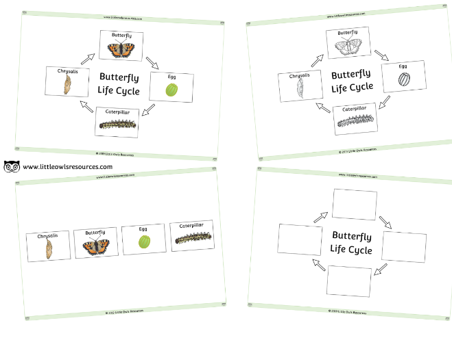 Butterfly Life Cycle Poster & Activities