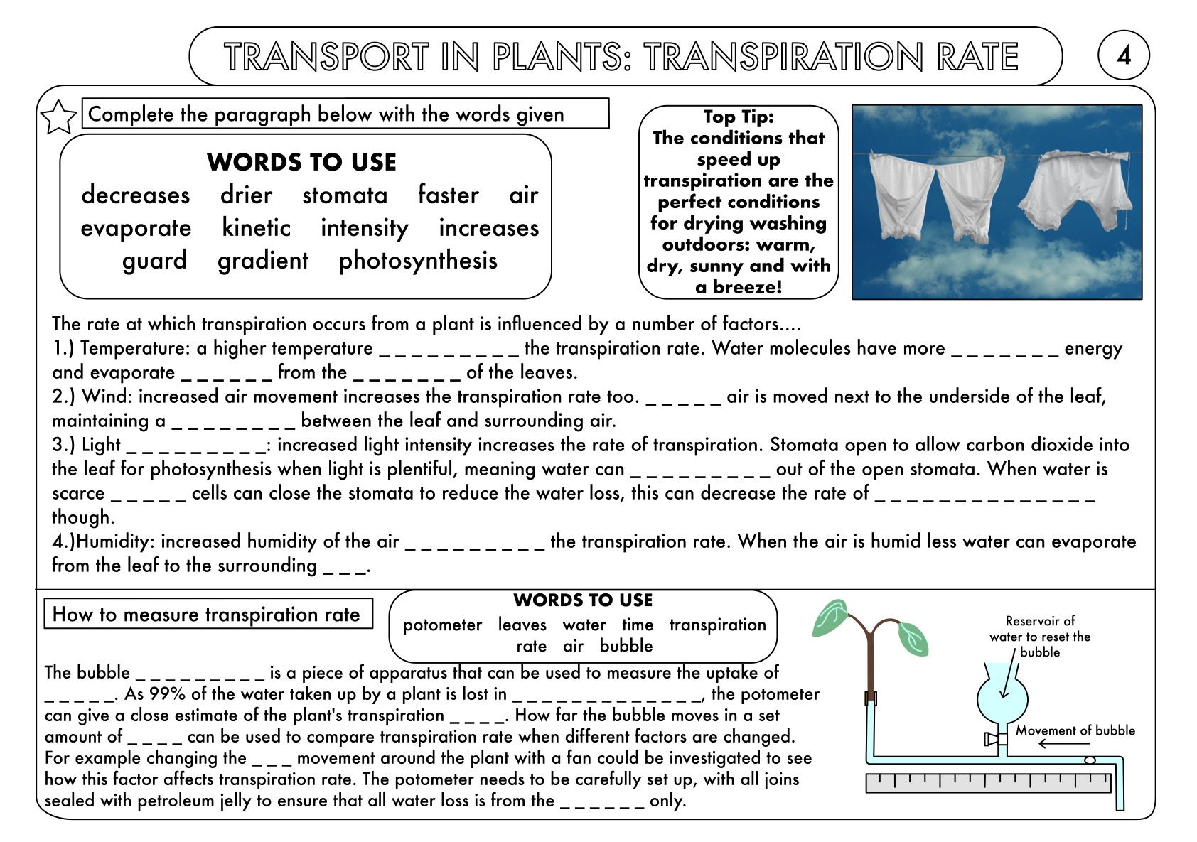 GCSE Plant Biology Worksheet Bundle