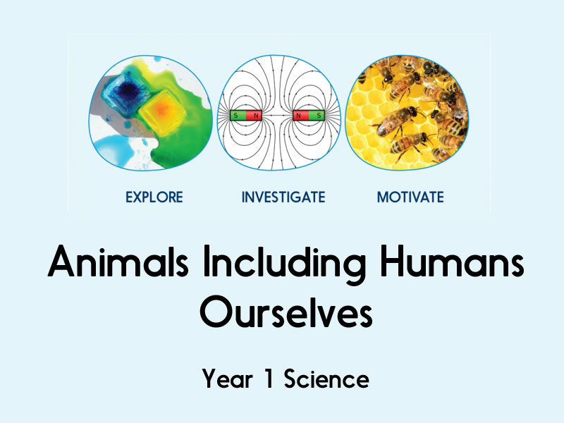 animals including humans - ourselves