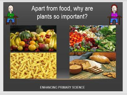 PLANTS (PHOTOSYNTHESIS)
