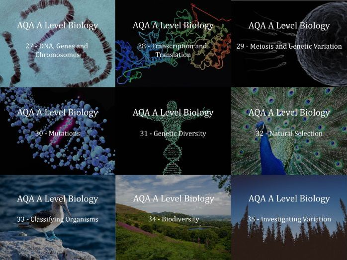 AQA A Level Biology Presentations Chapter 4 - Genetic information and Variation Between Organisms