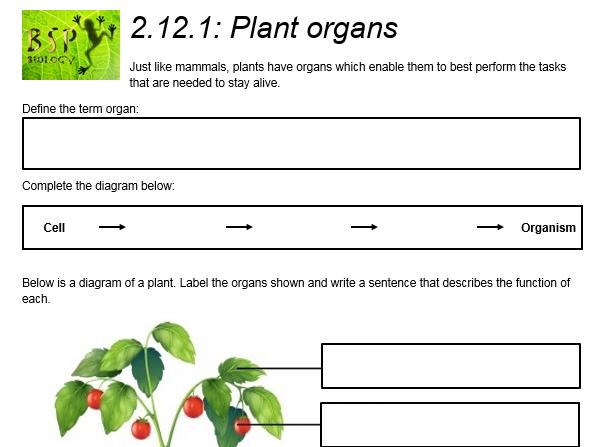 AQA GCSE Biology: Trilogy. Lesson 24 Plant organs