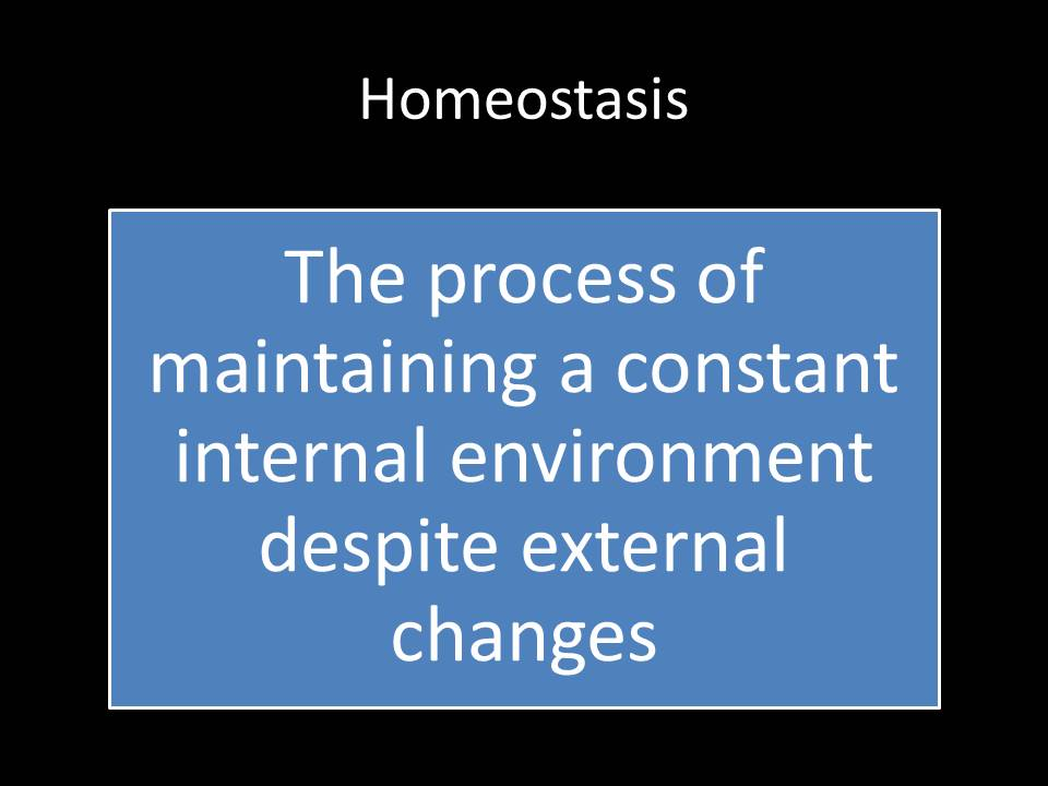 Homeostasis powerpoint and worksheet BTEC L3 HSC unit 3