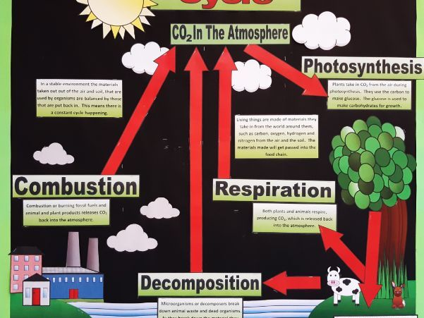 * NEW* The Carbon Cycle Display - Now available as a PDF