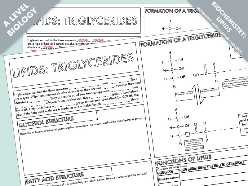 A Level Biology: Lipids (triglycerides) Summary Worksheet