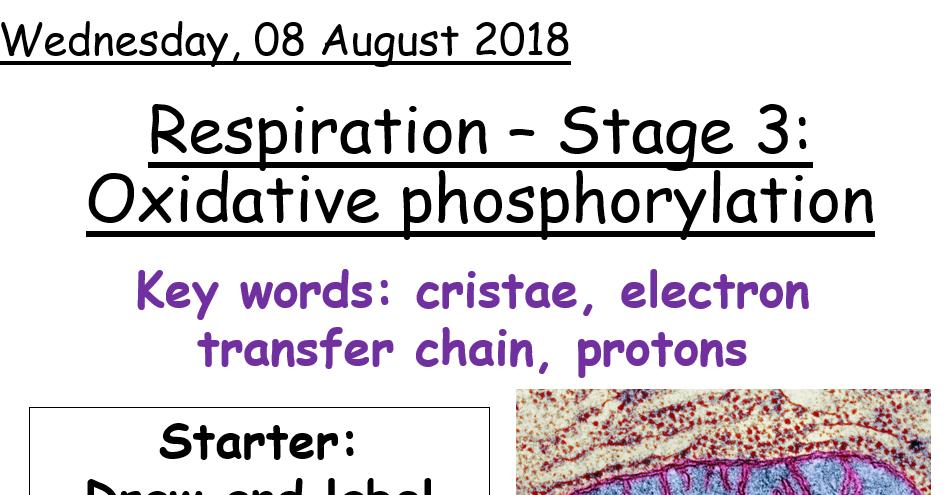 AQA A level Biology - Oxidative Phosphorylation