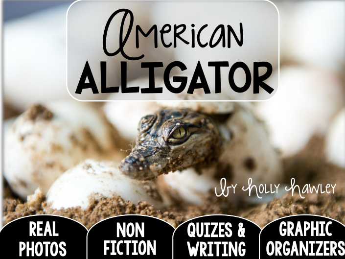 American Alligator-A Research Project-UK Version