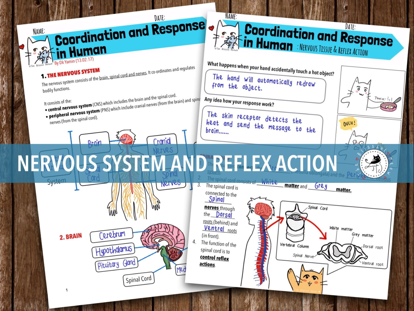Coordination and Response BUNDLE - Nervous System & Reflex Action